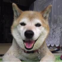 トム犬(いぬ)