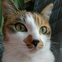 しおな Cats
